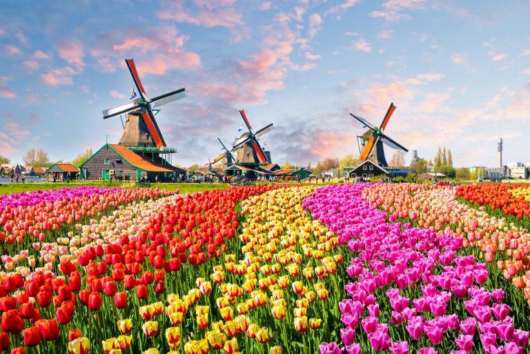 Traditional dutch windmills and houses near the canal in Zaanstad village, Zaanse Schans, Netherlands, Europe